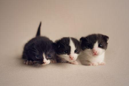 Rescue Kittens baby photographer Essex