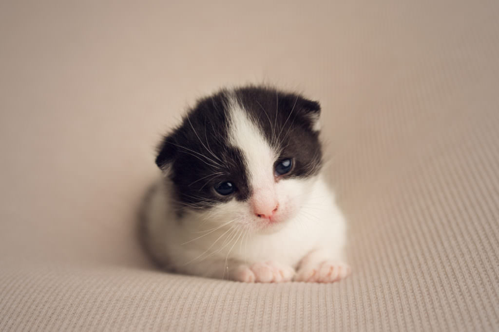 Rescue Kittens baby photography essex